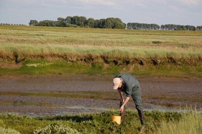 Zeegroenten snijden rond Oesterdam levert boetes op - Foto: Gemeente Goes