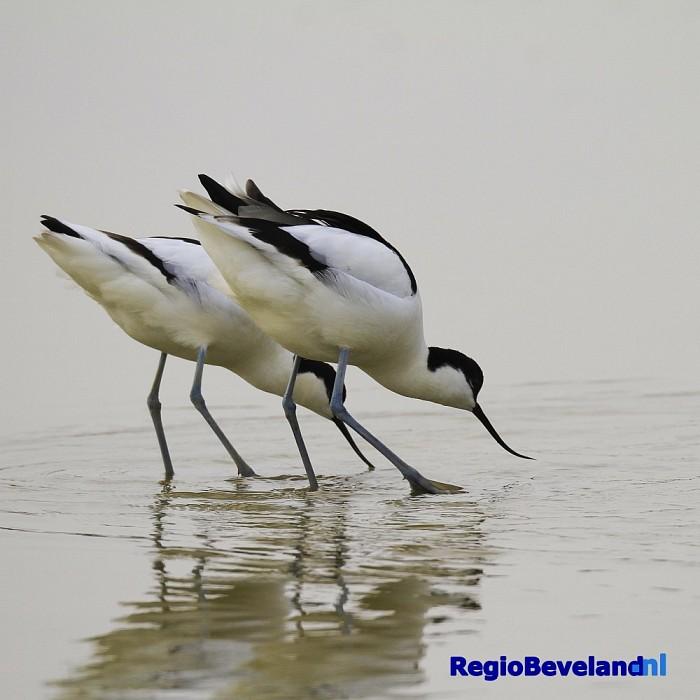 Crowdfundingsactie voor behoud Roggenplaat groot succes - Foto: Natuurmonumenten