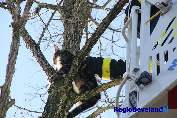 Brandweer haalt kat uit boom aan Europalaan te Goes - Foto: Marcel Kloet