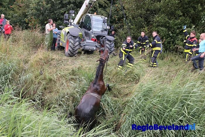 Brandweer haalt paard uit sloot te 's-Heer Arendskerke - Foto: Marcel Kloet