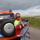 Zeehond van twee dagen oud gevonden bij Ellewoutsdijk