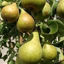 Gemeente Kapelle gaat op controlebezoek bij fruittelers