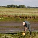 Zeegroenten snijden rond Oesterdam levert boetes op