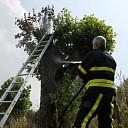 Brandweer rukt uit voor brandende boom op Oude Zeedijk