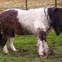 Zwaar verwaarloosde pony gevonden in gemeente Borsele