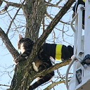 Brandweer haalt kat uit boom aan Europalaan te Goes
